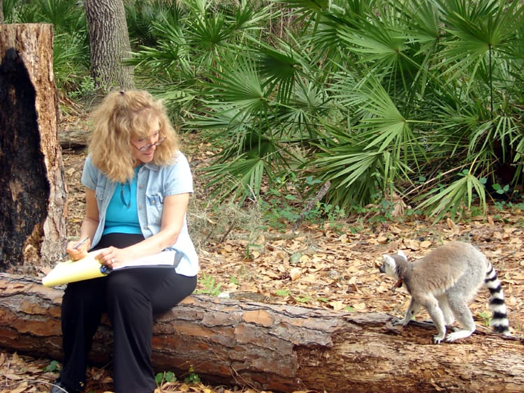 Linda grilling a ring-tailed lemur in Sarasota, Florida. Photo: Dr. Laurie Santos